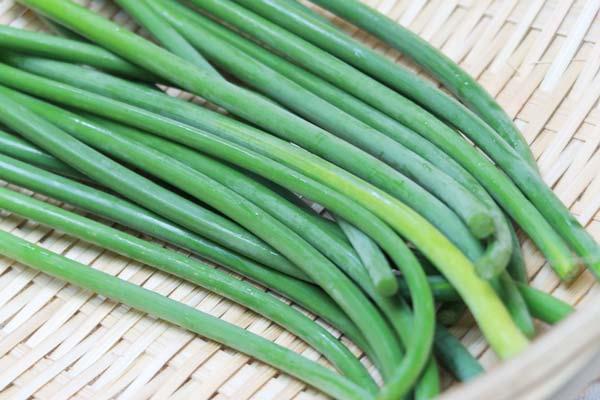 無肥料・自然栽培ニンニクの芽