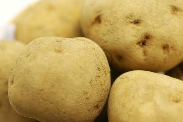 無肥料・自然栽培ジャガイモ
