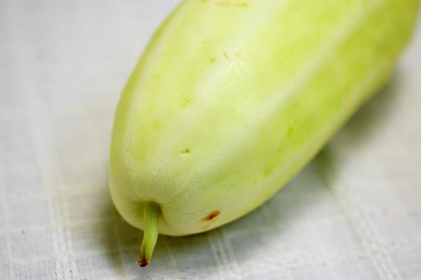無肥料・自然栽培絹ウリ