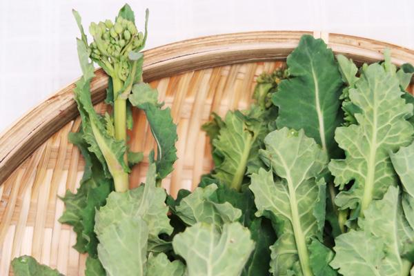 無肥料・自然栽培菜の花