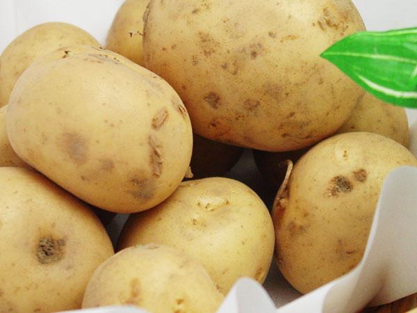 無施肥無農薬栽培ジャガイモ(西豊)