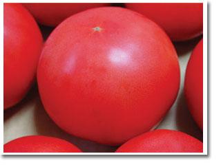 【無施肥無農薬栽培】完熟トマト