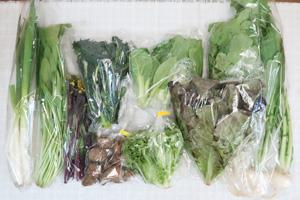 3月6日の無施肥無農薬栽培と自然栽培の定期宅配Mセット/小カブ、レタス、サニーレタス、青梗菜(チンゲン菜)、ネギ、大根葉(中抜き葉)、壬生菜、菜の花、紅菜苔、黒キャベツ