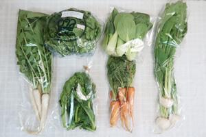 3月6日の無施肥無農薬栽培と自然栽培の定期宅配Sセット/間引きニンジン、小カブ、レタス、青梗菜(チンゲン菜)、大根葉(中抜き葉)、菜の花