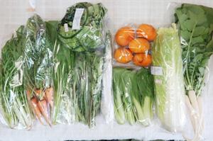 3月9日の無施肥無農薬栽培と自然栽培の定期宅配Mセット/間引きニンジン、温州みかん、白菜、レタス、大根葉(中抜き葉)、水菜、青梗菜(チンゲン菜)、壬生菜、エシャロット、菜の花