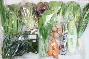 3月16日の無施肥無農薬栽培と自然栽培の定期宅配Lセット/サニーレタス、里芋、白菜、水菜、青梗菜(チンゲン菜)、ネギ、ジャガイモ(出島)、大根葉(中抜き葉)、壬生菜、小松菜、黒キャベツ、ニンジン、山東菜の菜の花、アイスプラント、エシャロット