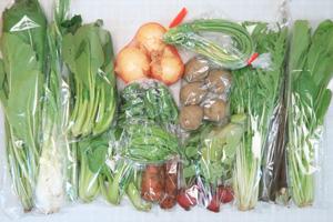 5月4日の無施肥無農薬栽培と自然栽培の定期宅配Lセット/新玉ねぎ、葉玉ねぎ、ジャガイモ(北あかり)、春堀りゴボウ、ニンジン、赤空豆、絹さや、ニンニクの芽、アスパラ、ラディッシュ、小松菜、青梗菜(チンゲン菜)、水菜、壬生菜、野沢菜