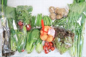 5月15日の無施肥無農薬栽培と自然栽培の定期宅配Lセット/新玉ねぎ、長ネギ、春堀りゴボウ、ジャガイモ(北あかり)、ラディッシュ、赤空豆、スナップエンドウ、絹さや、ニンニクの芽、サニーレタス、青梗菜(チンゲン菜)、水菜、野沢菜、小松菜、ミニトマト