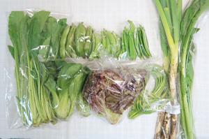 5月18日の無施肥無農薬栽培と自然栽培の定期宅配Mセット/長ネギ、そら豆、スナップエンドウ、絹さや、ニンニクの芽、青梗菜(チンゲン菜)、野沢菜、壬生菜、小松菜、サニーレタス
