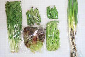 5月18日の無施肥無農薬栽培と自然栽培の定期宅配Sセット/長ネギ、そら豆、絹さや、水菜、壬生菜、サニーレタス