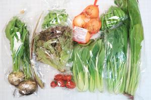 5月22日の無施肥無農薬栽培と自然栽培の定期宅配Mセット/新玉ねぎ、小カブ、山蕗、スナップエンドウ、絹さや、青梗菜(チンゲン菜)、野沢菜、小松菜、サニーレタス、ミニトマト