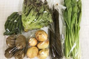 5月25日の無施肥無農薬栽培と自然栽培の定期宅配Sセット/春堀りゴボウ、ジャガイモ(北あかり)、新玉ねぎ、赤空豆、壬生菜、サニーレタス
