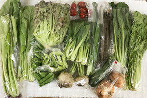 5月29日の無施肥無農薬栽培と自然栽培の定期宅配Lセット/春堀りゴボウ、新玉ねぎ、小カブ、ズッキーニ、青梗菜(チンゲン菜)、水菜、壬生菜、小松菜、野沢菜、ニラ、サニーレタス、スナップエンドウ、絹さや、えんどう豆、ミニトマト