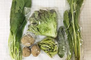 6月1日の無施肥無農薬栽培と自然栽培の定期宅配Sセット/ジャガイモ(花標津)、ズッキーニ、野沢菜、小松菜、サニーレタス、黒豆の枝豆