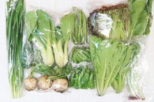 6月12日の無施肥無農薬栽培と自然栽培の定期宅配Mセット/カブ、ズッキーニ、スナップエンドウ、インゲン、ししとう、サニーレタス、ニラ、青梗菜(チンゲン菜)、山東菜、野沢菜