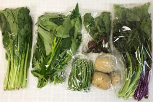 6月19日の無施肥無農薬栽培と自然栽培の定期宅配Sセット/ジャガイモ(西豊)、ラディッシュ、インゲン、サラダミックス、小松菜、ミニトマト