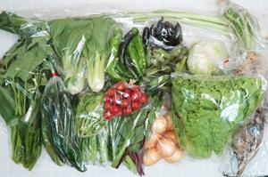 7月10日の無施肥無農薬栽培と自然栽培の定期宅配Lセット/大根、玉ねぎ、キャベツ、グリーンリーフ、キュウリ、万願寺とうがらし、紫とうがらし、オクラ、そら豆、青梗菜(チンゲン菜)、野沢菜、ツルムラサキ、エンサイ(空心菜)、菊菜、ミニトマト