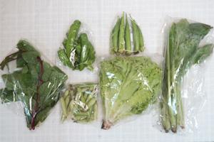 7月10日の無施肥無農薬栽培と自然栽培の定期宅配Sセット/リーフレタス、万願寺とうがらし、オクラ、えんどう豆、小松菜、ツルムラサキ