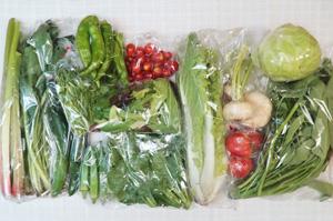 7月13日の無施肥無農薬栽培と自然栽培の定期宅配Lセット/カブ、キャベツ、キュウリ、万願寺とうがらし、オクラ、オクラ、山東菜、小松菜、ツルムラサキ、エンサイ(空心菜)、ルバーブ、菊菜、ミックスリーフ、トマト、ミニトマト