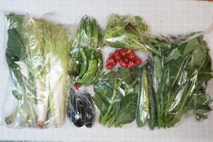 7月13日の無施肥無農薬栽培と自然栽培の定期宅配Mセット/キュウリ、茄子、万願寺とうがらし、オクラ、山東菜、小松菜、ツルムラサキ、エンサイ(空心菜)、ミックスリーフ、ミニトマト