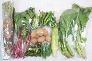 10月9日の無施肥無農薬栽培と自然栽培の定期宅配Mセット/大根、ゴボウ、トウモロコシ、万願寺とうがらし、オクラ、枝豆、小松菜、シカクマメ、野沢菜、赤かぶ中抜き葉
