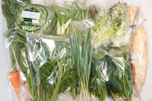 12月11日の無施肥無農薬栽培と自然栽培の定期宅配Mセット/大根、葉付きニンジン、レタス、サニーレタス、レンコン、青梗菜(チンゲン菜)、わさび菜、ほうれん草、ニンニクの葉、小松菜