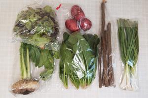 12月18日の無施肥無農薬栽培と自然栽培の定期宅配Sセット/天王寺カブ、ジャガイモ(レッドムーン)、ゴボウ、サニーレタス、ほうれん草、ニンニクの葉