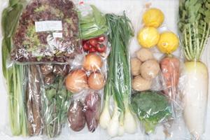 4月2日の無施肥無農薬栽培と自然栽培の定期宅配Lセット/大根、ニンジン、里芋、ジャガイモ(出島)、サツマイモ、ゴボウ、玉ねぎ、ブロッコリー、サニーレタス、小松菜、葉玉ねぎ、のらぼう菜、絹さや、ミニトマト、はるか