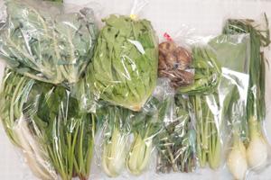 4月5日の無施肥無農薬栽培と自然栽培の定期宅配Mセット/大根葉(中抜き葉)、菊芋、ロマネスコ、グリーンリーフ、小松菜、青梗菜(チンゲン菜)、ほうれん草、葉玉ねぎ、のらぼう菜、絹さや