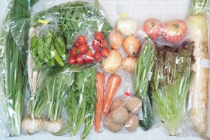 6月21日の無施肥無農薬栽培と自然栽培の定期宅配Lセット/大根、小カブ、玉ねぎ、ジャガイモ(西豊)、ニンジン、ズッキーニ、大根葉(中抜き葉)、サニーレタス、ししとう、インゲン、野沢菜、わさび菜、ニラ、トマト、ミニトマト