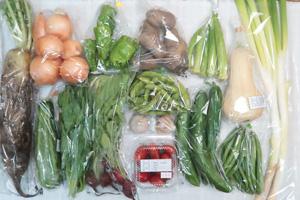 8月2日の無施肥無農薬栽培と自然栽培の定期宅配Lセット/大根、玉ねぎ、ジャガイモ(メークイン)、バターナッツカボチャ、ズッキーニ、キュウリ、ピーマン、インゲン、枝豆、オクラ、ツルムラサキ、ラディッシュ、ミニトマト、ニンニク、長ネギ