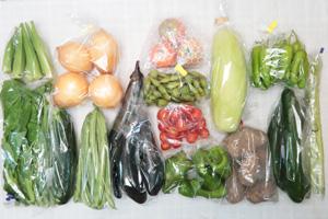 8月20日の無施肥無農薬栽培と自然栽培の定期宅配Lセット/玉ねぎ、ジャガイモ(メークイン)、絹ウリ、ズッキーニ、キュウリ、茄子、ピーマン、ししとう、インゲン、枝豆、アスパラ、オクラ、ツルムラサキ、ミニトマト、トマト
