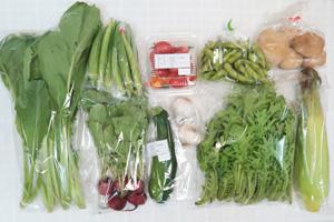 10月1日の無施肥無農薬栽培と自然栽培の定期宅配Mセット/ジャガイモ(男爵)、トウモロコシ、ズッキーニ、枝豆、オクラ、ラディッシュ、わさび菜、小松菜、ミニトマト、ニンニク