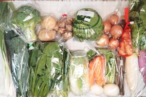 1月10日の無施肥無農薬栽培と自然栽培の定期宅配Lセット/大根、小カブ、玉ねぎ、ジャガイモ(出島)、里芋、ニンジン、ゴボウ、ブロッコリー、レタス、白菜、小松菜、ほうれん草、黒キャベツ、九条ネギ、新生姜