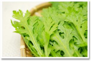 【無肥料・自然栽培】菊菜