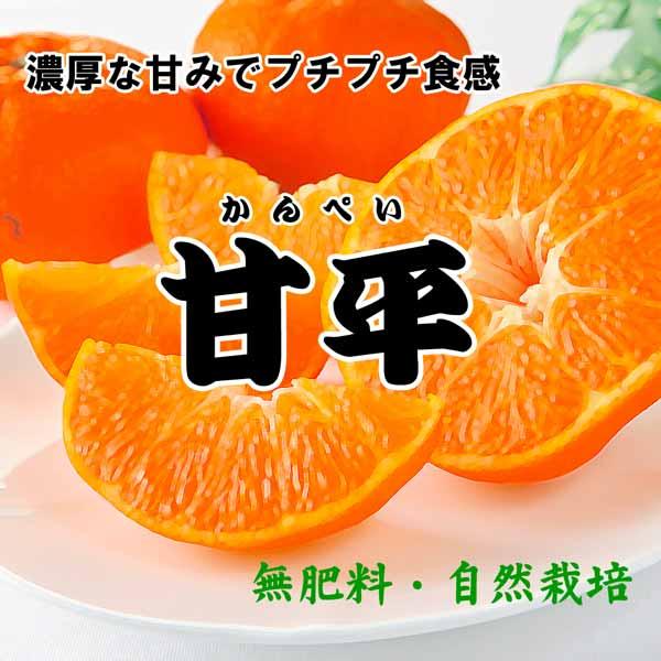 無肥料・自然栽培甘平(かんぺい)