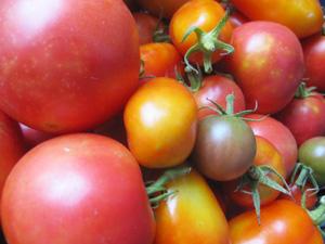 無肥料・自然栽培完熟トマト