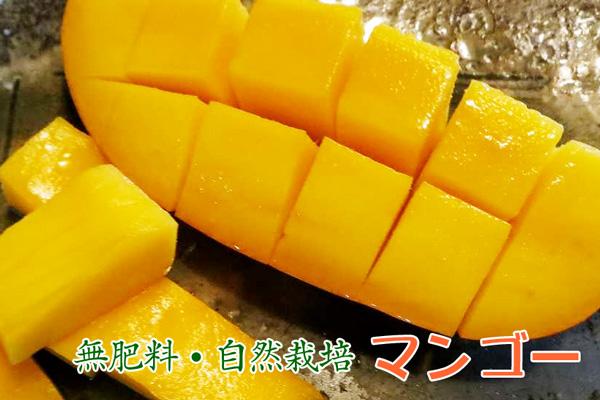 無肥料・自然栽培マンゴー