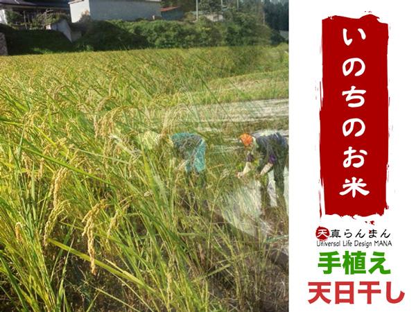 無肥料・無農薬栽培いのちのお米