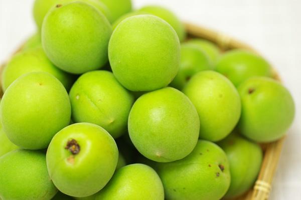 無肥料・自然栽培の梅の里自然農園の南高梅青梅