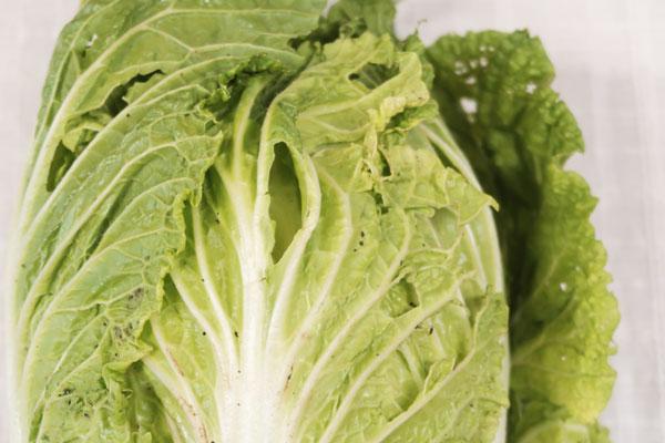無肥料・自然栽培白菜